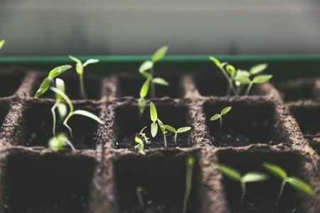 seedlings grow