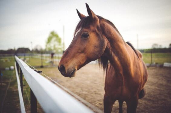 https://www.pexels.com/photo/brown-horse-on-field-6468/
